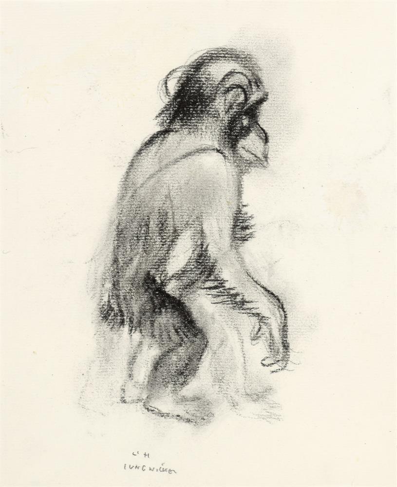 Lieserl von Schönbrunn (Junger Schimpanse)